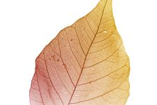 Free Autumn Leaf Stock Images - 6333484