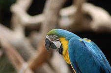 Free Macaw Stock Photos - 6333823