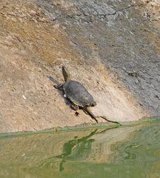 Free Turtle Stock Photo - 6334150