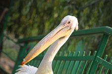 Free Pelican Stock Images - 6334304
