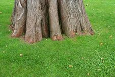 Free Trunk Of Old Tree On Green Grass Royalty Free Stock Photos - 6334858