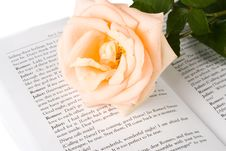 Free The Rose On The Book Royalty Free Stock Image - 6335506