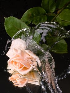 Free Pink Rose With Water Drops Stock Images - 6335604