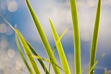Free Sunset On Grass Royalty Free Stock Images - 6337269