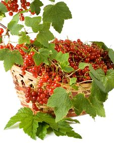 Free Red Currant Stock Photography - 6338812