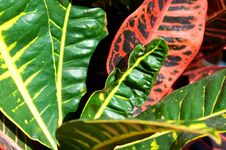 Free Colorful Plant Royalty Free Stock Photo - 6339385