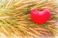 Free Romantic Lovely Valentine Red Heart On Grass Flower For Love Background Stock Photography - 63300172