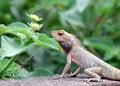 Free Lizard Stock Photo - 6341870