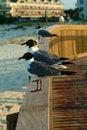 Free Seagull Gathering Stock Photos - 6346173