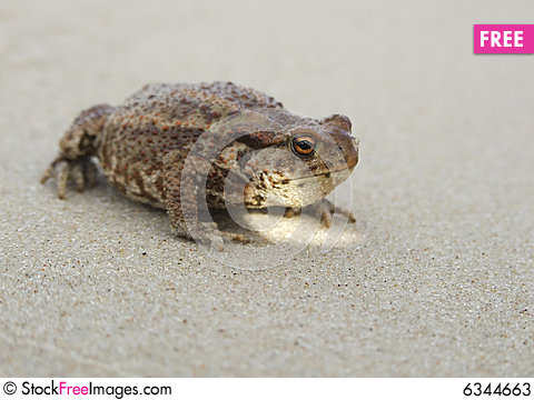 Free Toad On The Beach Stock Photos - 6344663