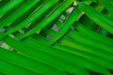 Free Palm Leaf Background Royalty Free Stock Photography - 6340217