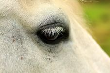 Free Horse S Eye Stock Photos - 6340473