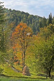 Free Early Autumn Royalty Free Stock Photos - 6342018