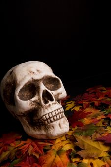 Free Halloween Skull Stock Image - 6342481