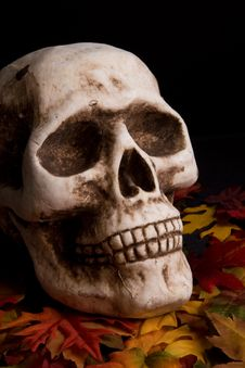 Free Halloween Skull Royalty Free Stock Images - 6342489
