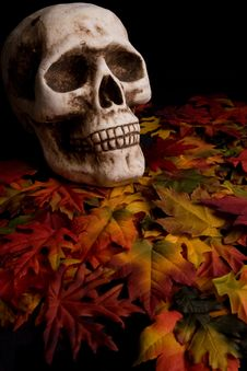 Free Halloween Skull Royalty Free Stock Image - 6342496