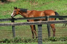Brown Horse Standing Near A Fence Stock Photography