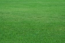 Free Field Of Summer Grass Stock Images - 6344224
