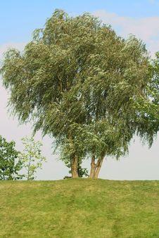 Free Single Tree Stock Photography - 6344592