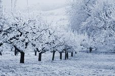 Free Winter Landscape Stock Image - 6344821