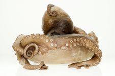 Free Frozen Octopus Stock Photos - 6345303