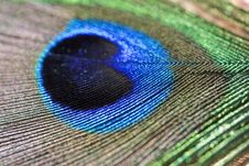 Free Peacock Feather Royalty Free Stock Image - 6345396