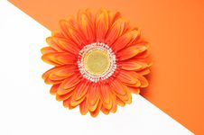 Free Orange Flower Half White Half Orange Stock Photo - 6346790