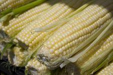 Free Organic Corn Sale Royalty Free Stock Photography - 6346967