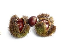Free Chestnut Stock Photography - 6347032