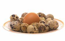 Free Avian Eggs. Stock Photography - 6347092