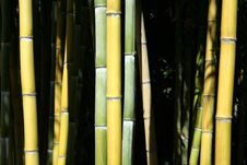 Free Bamboo Forest Royalty Free Stock Photos - 6347468