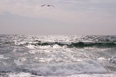 Free The Seagull Royalty Free Stock Images - 6347529