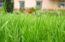 Free Green Grass Focus Stock Photo - 6347740