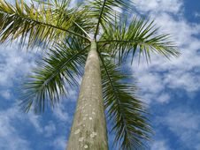 Free Palm Tree Stock Photos - 6347863