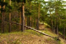 Free Green Coniferous Forest Stock Photography - 6347992