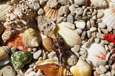 Free Red Star And Sea Shells Royalty Free Stock Images - 6348079