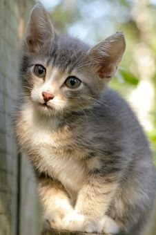Free Kitten Near The Fence Stock Images - 6348184