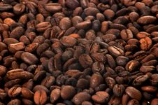 Free Seeds Of Coffee Stock Image - 6348511
