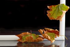 Free Autumnal Leaves Stock Image - 6348801