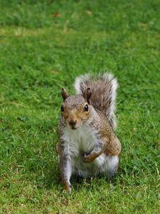 Free Squirrel Stock Images - 6349054