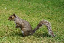 Free Squirrel Stock Photo - 6349150