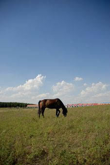 Free Horse On The Glassland Royalty Free Stock Images - 6349229