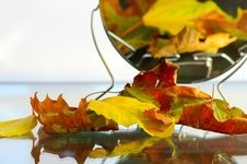 Free Several Leaves Royalty Free Stock Photo - 6349765