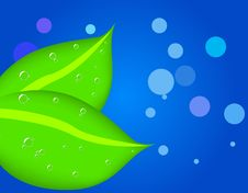 Free Two Leaves With Dew Royalty Free Stock Images - 6349769
