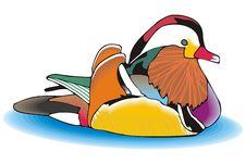 Free Mandarin Duck Stock Image - 6349791