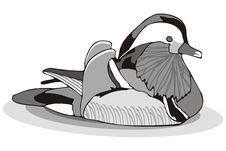 Free Mandarin Duck Stock Images - 6349794