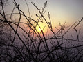 Free Branches And Sunset Stock Photography - 6351742
