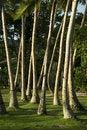 Free Palm Tree Trunks Stock Photos - 6352083