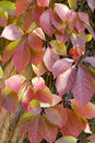 Free Red Leaves Stock Image - 6352111