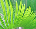 Free Green Leaves Stock Photography - 6356742